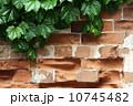 壁面 壁 蔦の写真 10745482