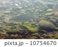 桜鱒 山女魚 魚類の写真 10754670