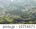 桜鱒 山女魚 魚類の写真 10754671