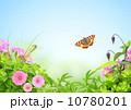 空 夏 グリーンの写真 10780201