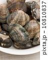 浅蜊 二枚貝 貝の写真 10810837