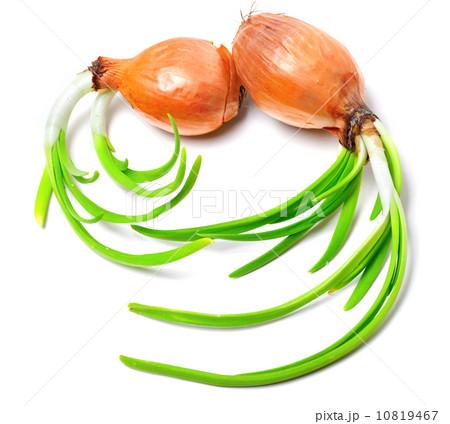Sprouting onionsの写真素材 [10819467] - PIXTA