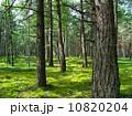 エコ 環境 生態の写真 10820204