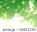 エコイメージ素材 10822293