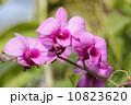 きれい 綺麗 小枝の写真 10823620
