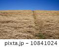 土手と青空と枯草 10841024