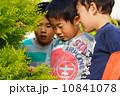 発見 何かを見つめる3人の子供たち 10841078