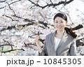 桜とビジネスウーマン 10845305