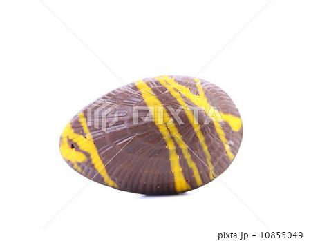 Dark chocolate seashell.の写真素材 [10855049] - PIXTA