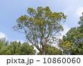 木 樹木 樹の写真 10860060