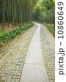 バンブー 竹 青竹の写真 10860649