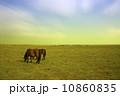 馬 放牧 野原の写真 10860835