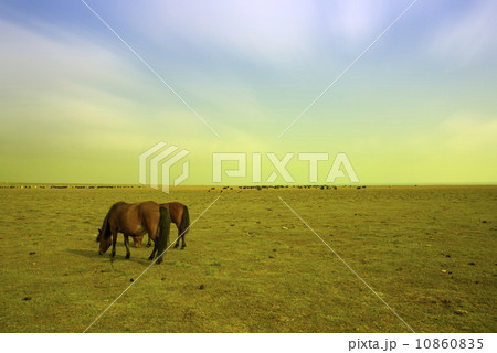 Horses and grassland in Qinghai, China. 10860835