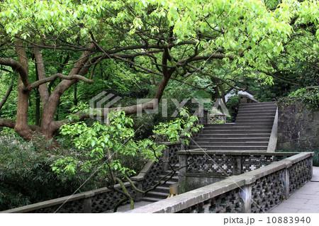 観光地 杭州 杭州市 10883940