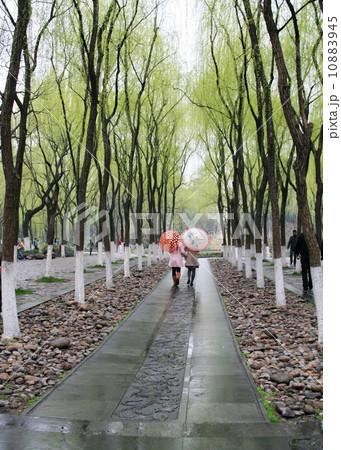 観光地 杭州 杭州市 10883945
