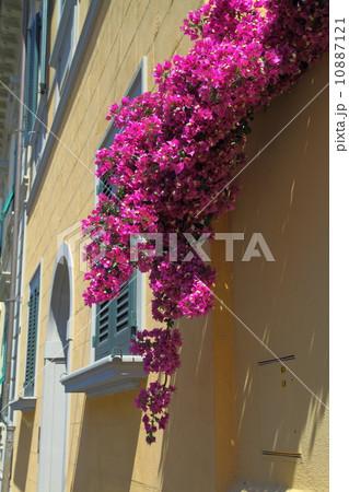 ヨーロッパの花 10887121
