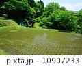 田 早苗 苗の写真 10907233