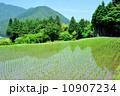 田 早苗 苗の写真 10907234