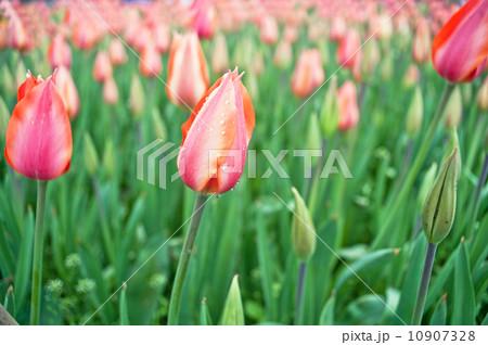 花 フラワー お花 10907328