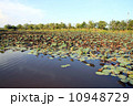 Lotus pond in country side 10948729