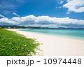 グンバイヒルガオ 海 緑の写真 10974448