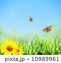 空 草 グリーンの写真 10989961