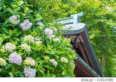 鎌倉宮の手水舎と紫陽花 11013486