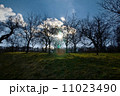 木 景色 樹木の写真 11023490