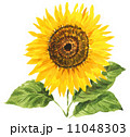 ヒマワリ 水彩 花のイラスト 11048303