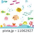 熱帯魚とサンゴの海 11062927