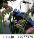 スターチス越しのアメリカンバイク 11077379