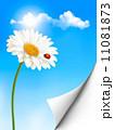 きれい 綺麗 花のイラスト 11081873