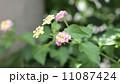 花② 11087424