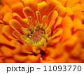 the Selection of Various Colorful Flower in nature 11093770