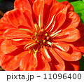 the Selection of Various Colorful Flower in nature 11096400
