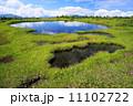 湿原 夏山 苗場の写真 11102722