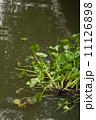 ウォーター 水 水分の写真 11126898