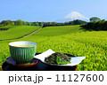お茶 緑茶 茶畑の写真 11127600