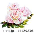 芽 蕾 花の蕾のイラスト 11129836