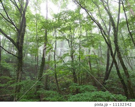 霧の森(三瓶山) 11132342