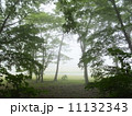 霧 森林 森の写真 11132343