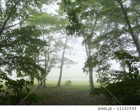 霧の森(三瓶山) 11132343