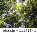 緑陽 11141541