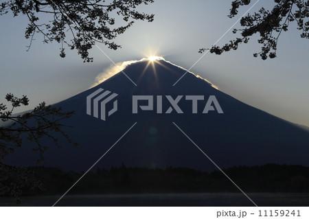 田貫湖の桜とダイヤモンド富士 11159241
