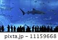 美ら海水族館 11159668