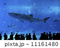 美ら海水族館 11161480