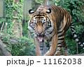 虎 11162038