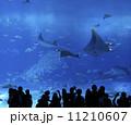 美ら海水族館 11210607