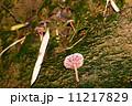 カヤタケ 茸 菌類の写真 11217829