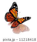 飛行 トロピカル 熱帯のイラスト 11218418